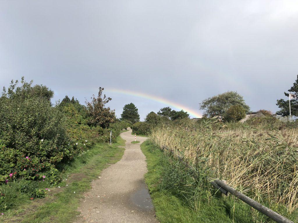Weg durch Heidelandschaft mit Sträuchern und Regenbogen im Hintergrund